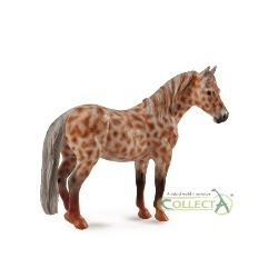 KLACZ BRITISH SPOTTED PONY MARE